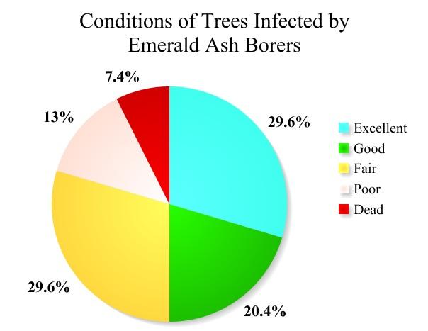 Ash tree health